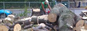 Services d'abattage d'arbres Québec