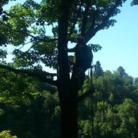 André Bouchard Services d'arbres