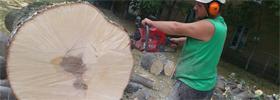 Abattage d'arbres Québec
