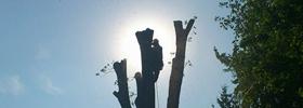 Services abattage d'arbres