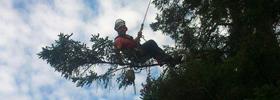 Arboriculture élagage