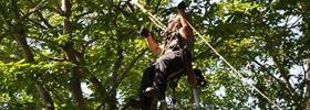 Services d'arbres Québec